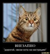 Кастрация котов.