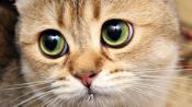 Болезни кошек и котов.