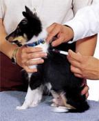 Вакцинация собак.