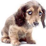 Болезни собак. Статья о собачьих болезнях.